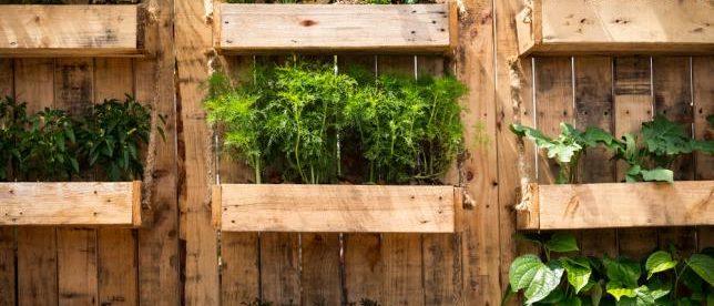 Pratiquer le jardinage vertical dans son potager