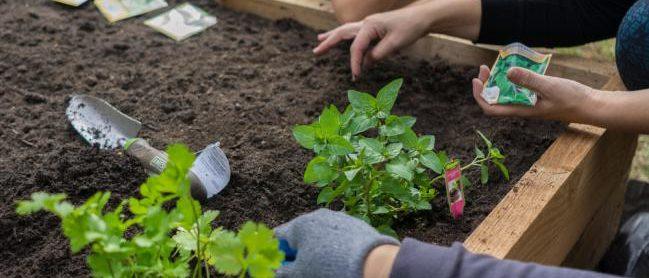 Quel legume planter dans un petit jardin