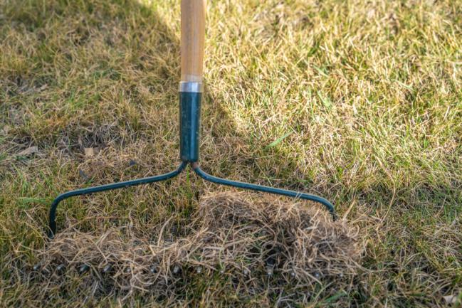 Ramassage des herbes mortes après l'hiver au râteau