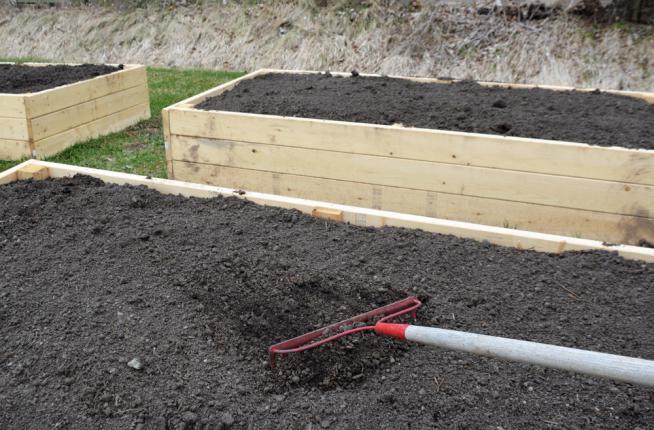Ratissage du sol d'un carré potager