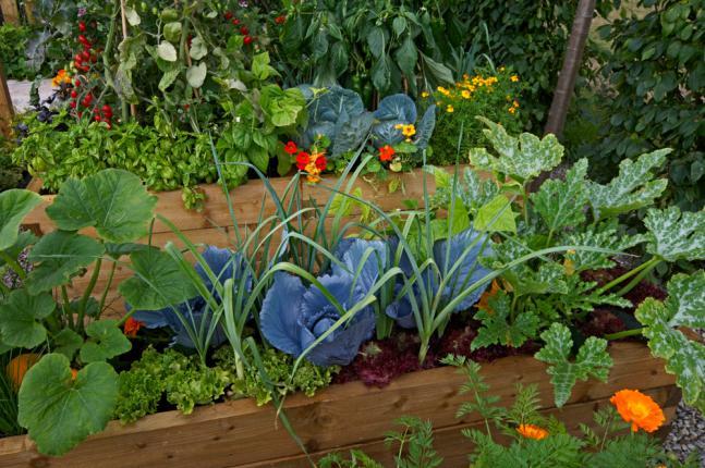 Sélection de légumes et de fleurs pour un jardin potager
