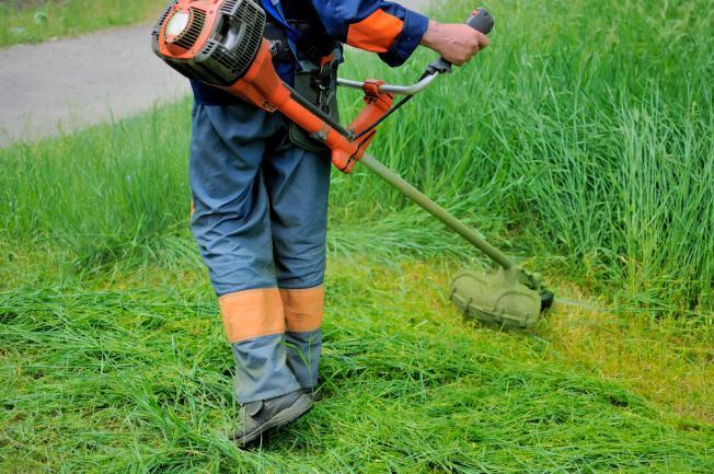 Taille pelouse dense et haute à la débroussailleuse