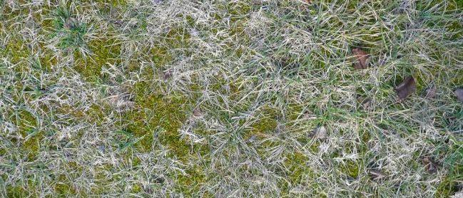 Texture du gazon en hiver