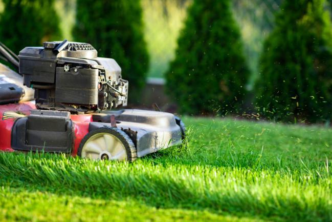 Tondeuse pelouse