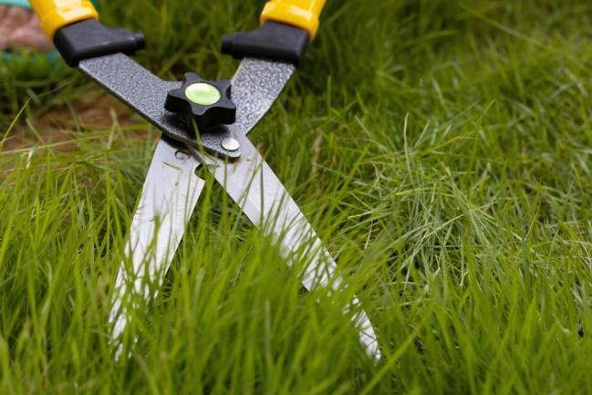 Tonte écologique de la pelouse