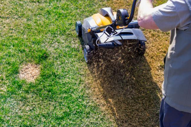 Utilisation d'un scarificateur pour aérer la pelouse