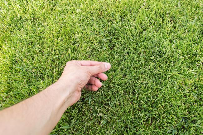 Vérification de l'état de la pelouse