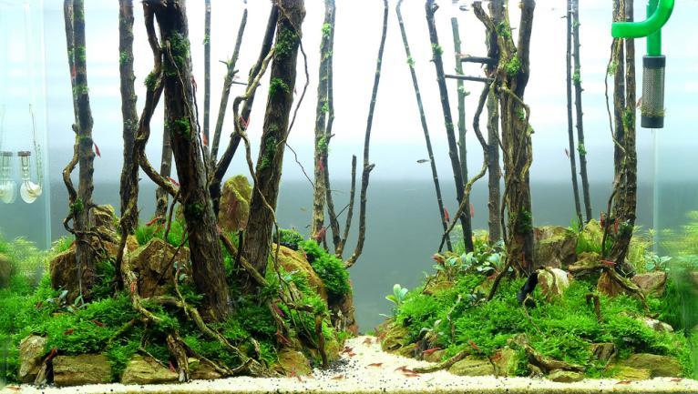 Aquascape forêt