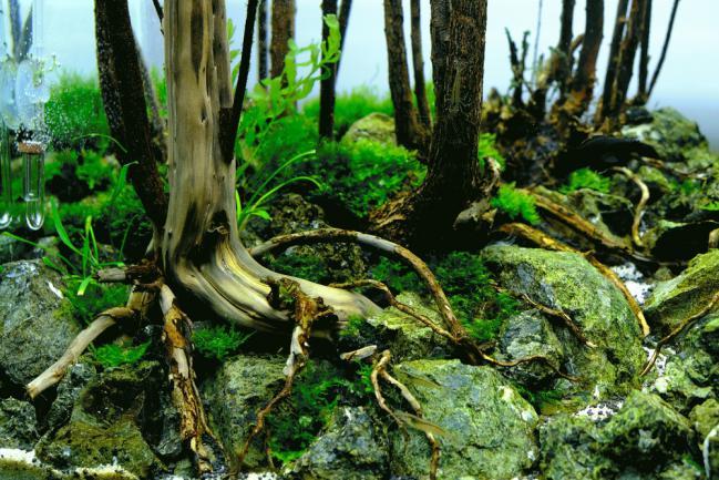 Aquascape jungle
