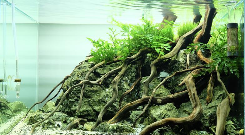 Aquascaping jungle racine