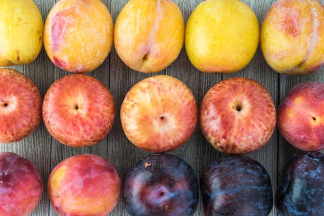 Assortiment de plumcots (figue x prune x abricot)