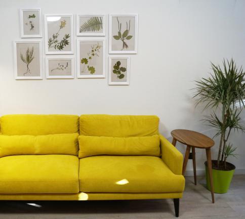 Exemple de décor lumineux avec un herbier