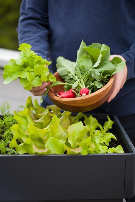 Faire pousser des radis et salades sur la terrasse
