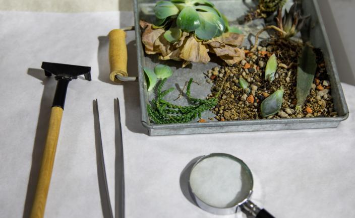 Matériel pour créer un herbier