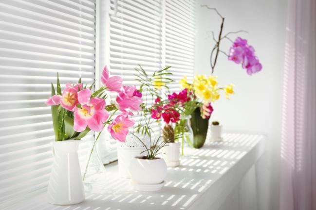 Orchidée et fleurs d'intérieur sous ensoleillement