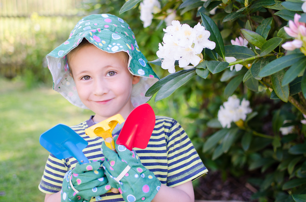 Planter et entretenir un arbuste de rhododendron
