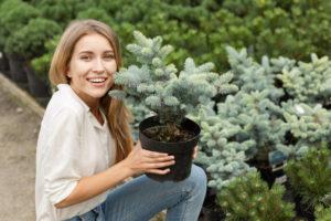 Planter un epicea dans son jardin