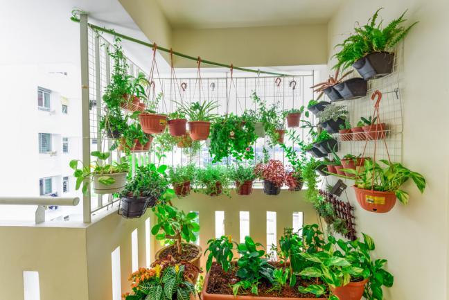 Pots potagers suspendus sur le balcon