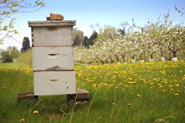 Ruche de pollinisation