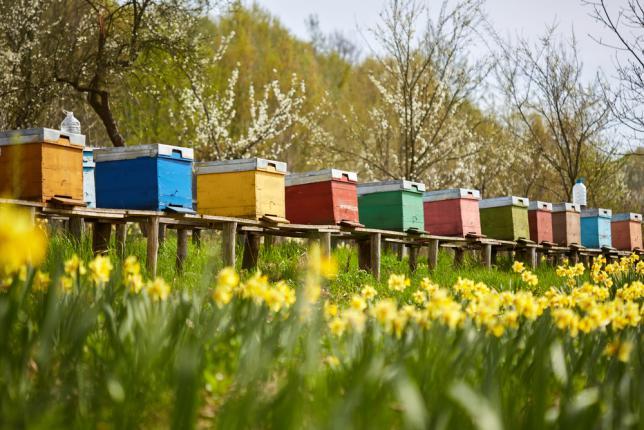 Une rangée de ruches dans un champ de fleurs avec un verger derrière