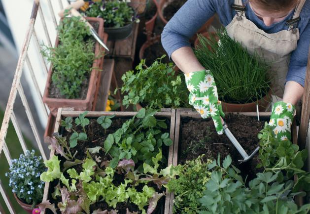 Aménager un jardin potager d'intérieur