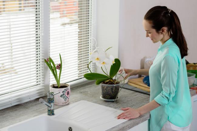 Entretenir une orchidée d'intérieur