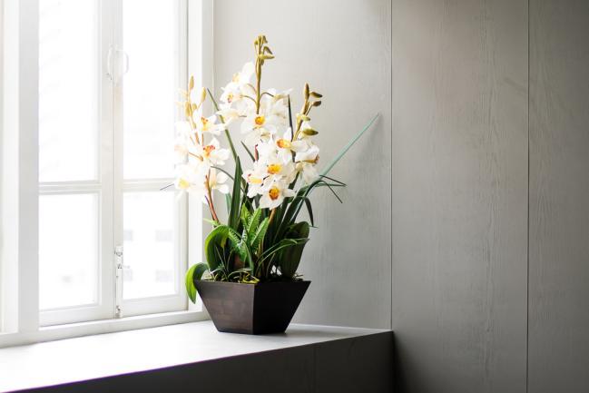 fleur parfumée d'intérieur