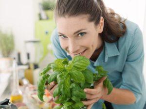planter basilic