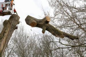 Abattage d'arbre pro