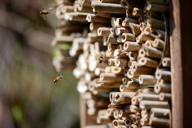 Abri pour abeilles dans le jardin