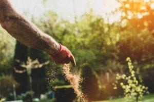 Ajout d'engrais pour fertiliser le jardin