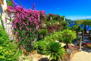 Amenagement d'un jardin mediterraneen