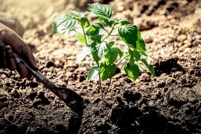Besoin en engrais des plantes