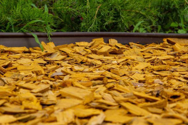 Bois jaune utilisé comme BRF pour le jardin