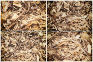 Brf ou bois rameal fragmenté