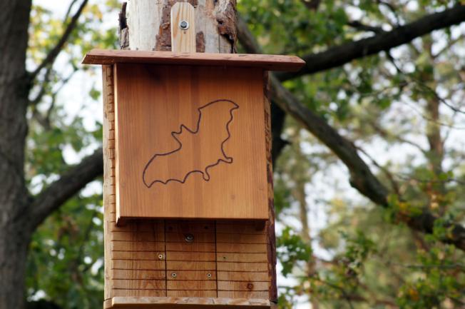 Construire un abri pour chauve-souris