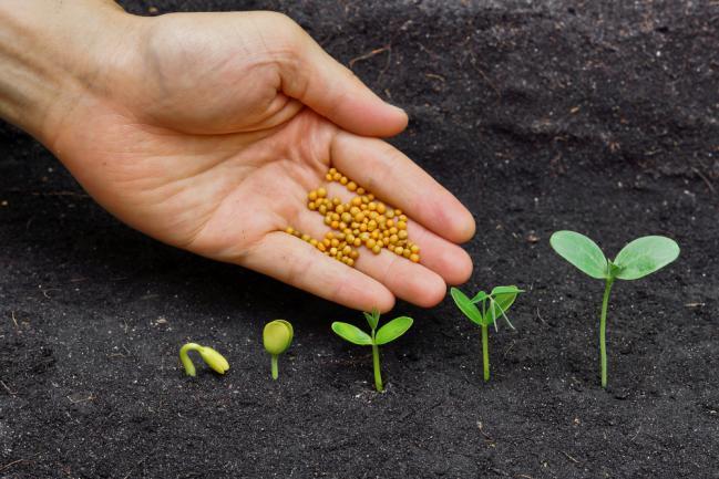 Engrais riche en azote pour la stade de croissance de la plante