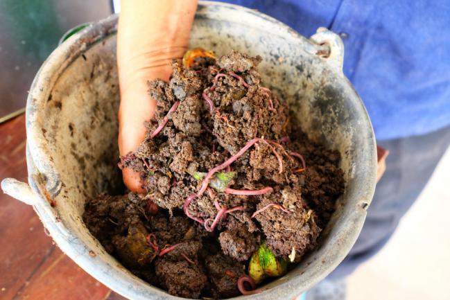 Faire un vermicompost ou compostage au ver de terre