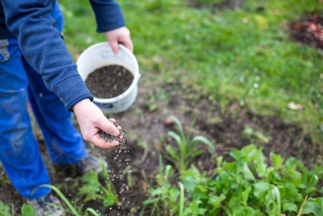 Fertilisant phosphate pour corriger les carences