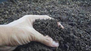 Greffe de terre et wormcasting (fertilisation au ver)
