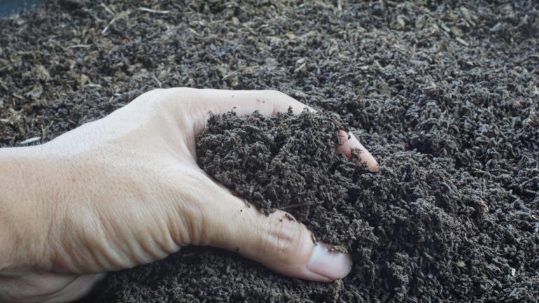Greffe de terre et wormcasting (fertilisation au vers)