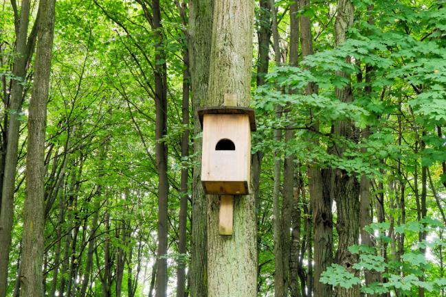 Hébergement pour chauve-souris