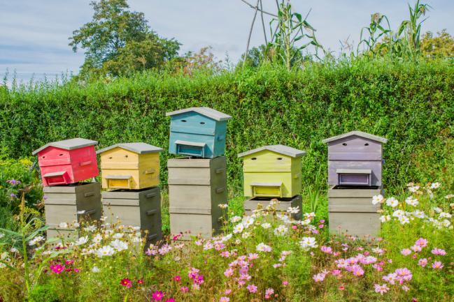 Installer de jolies ruches dans le jardin