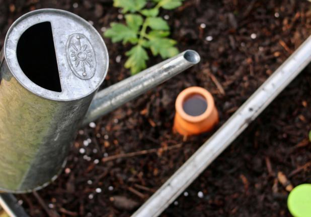 Irrigation des plantes à l'aide d'une olla