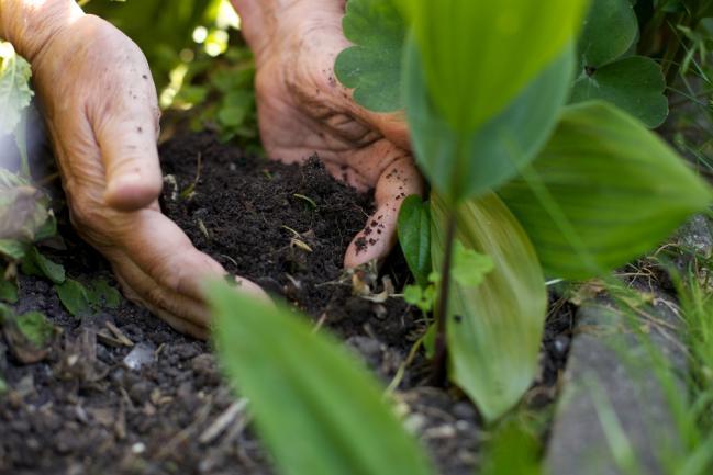 Nourrir le sol d'engrais