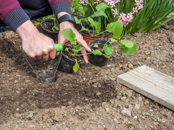 Planter des vivaces dans une terre fertilisée en engrais bio