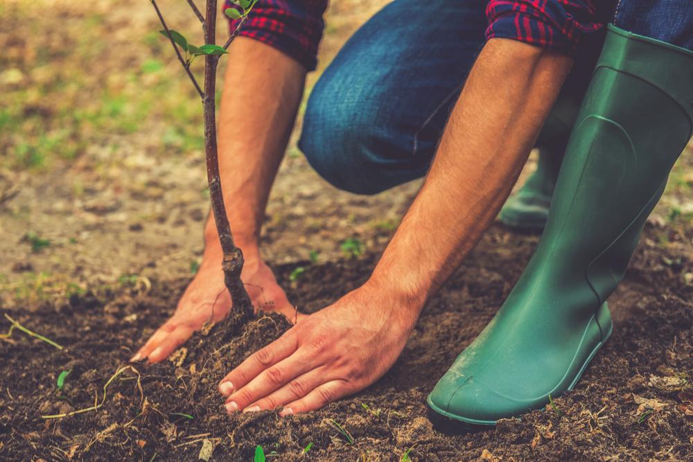 Planter un arbre dans le jardin