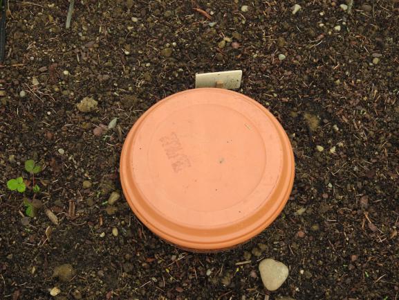 Poterie d'irrigation en argile