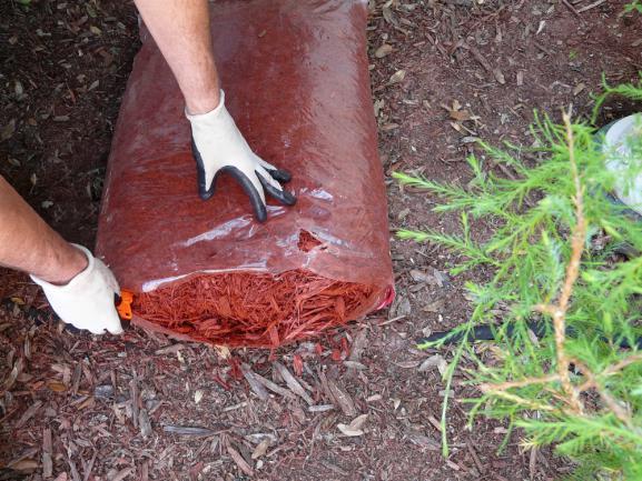 Préparation a repartir un paillis de cyprès ornemental sur le jardin