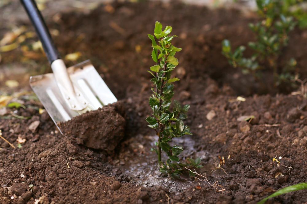 Prestation de plantation d'arbre : apport d'engrais, arrosage et matériel